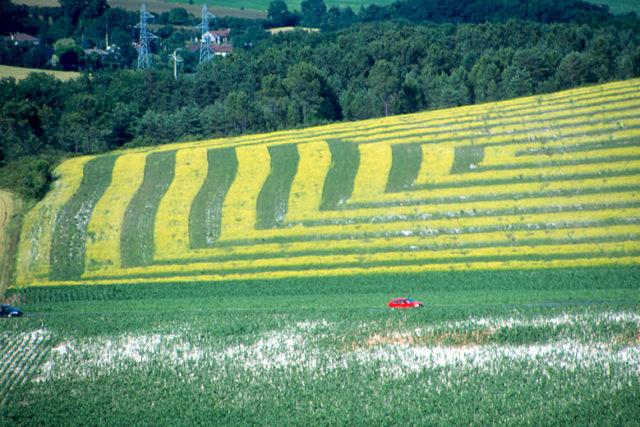 sauve sol jaune 1site 640x427 Home Page